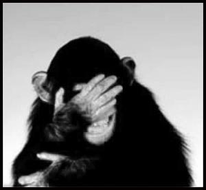 emb chimp